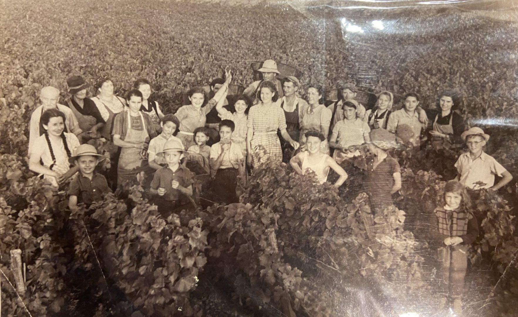 Lucien Muzard vendanges Santenay Bourgogne